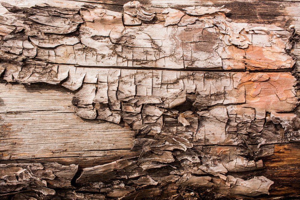 Ageing bark of a tree similar to ageing skin