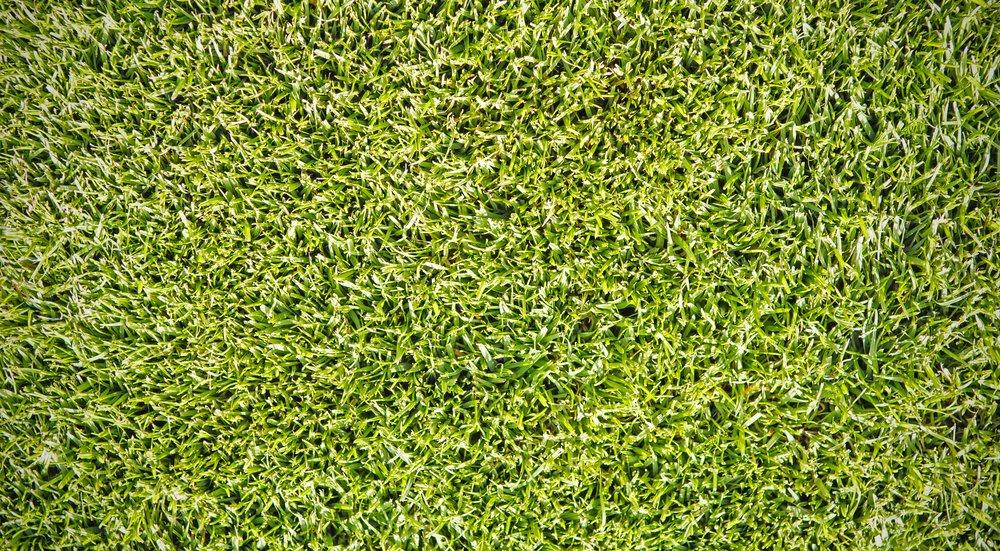 A piece of green grass. A patch of Australian football oval
