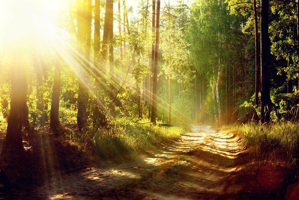beautiful forest scene of dappled sunlight through trees