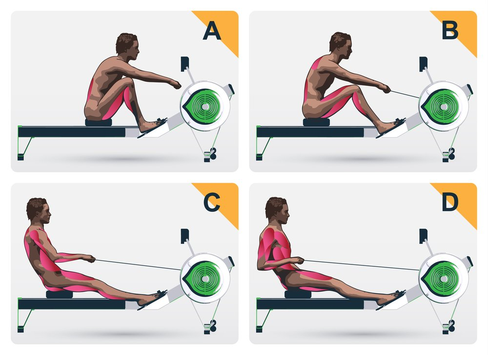demonstration of the muscles at work on a rowing machine